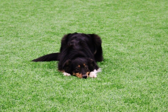 Hönsetorps valpträff på GBG hundarena 167