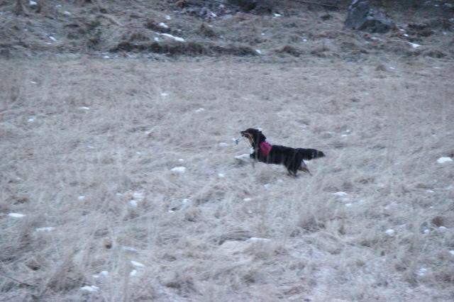 2013-03-20 Promenad och upplet 120