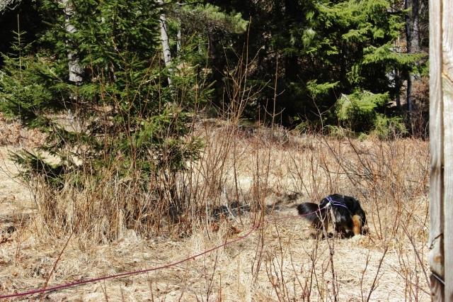 2013-04-20 Heldag i skogen 089