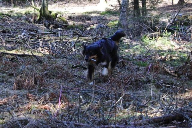 2013-04-20 Heldag i skogen 092