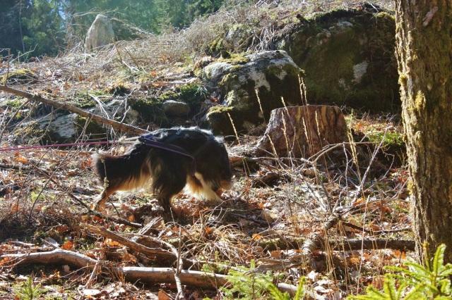 2013-04-20 Heldag i skogen 105