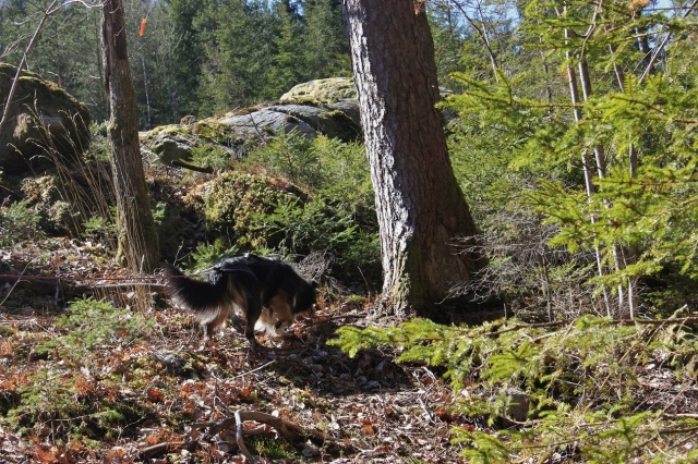2013-04-20 Heldag i skogen 106