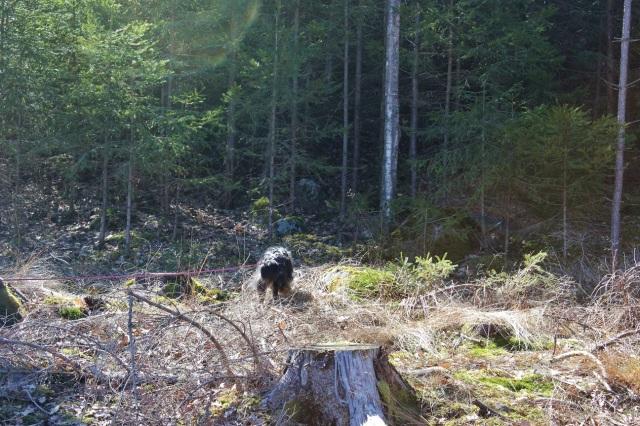 2013-04-20 Heldag i skogen 117