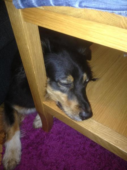 trötthund