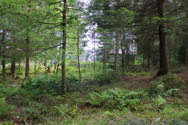 2014-06-21 Trädgårdsröjning 033