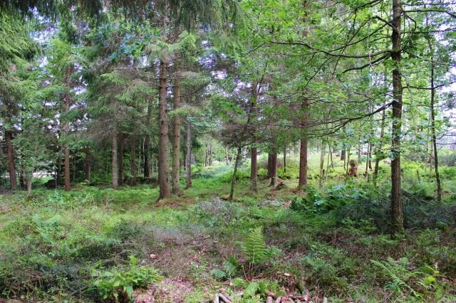 2014-06-21 Trädgårdsröjning 034