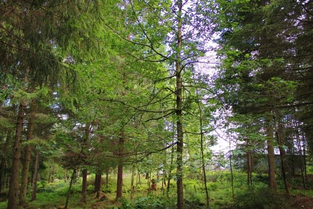 2014-06-21 Trädgårdsröjning 035
